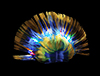 Light-Up Mohawk - Black  Blue  and Yellow
